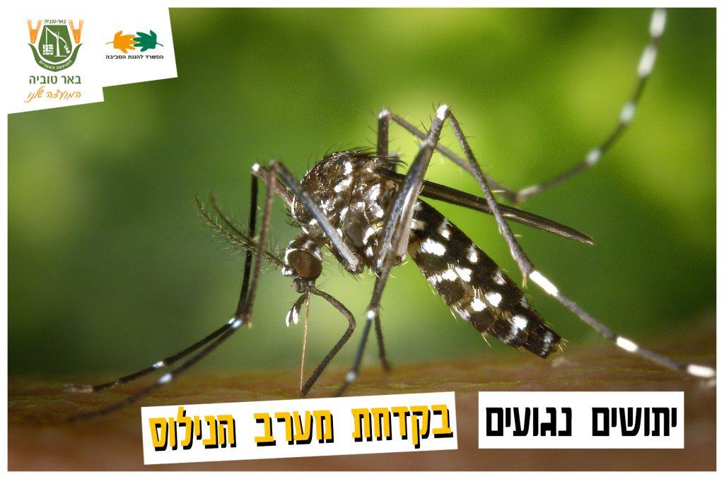 יתושים נגועים בקדחת מערב הנילוס